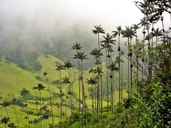 TravelPass.gr - Cocora: Η κοιλάδα με τους φοίνικες