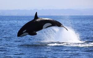 Travelpass.gr - Φέτος το καλοκαίρι θα είσαι φάλαινα ή γοργόνα;a