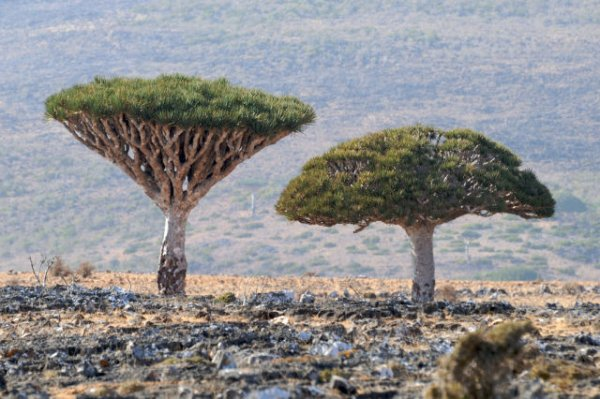 TravelPass.gr - Νησί Σοκότρα: Ένα πραγματικά αλλόκοτο τοπίο