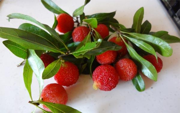 TravelPass.gr - Παράξενα φρούτα του πλανήτη