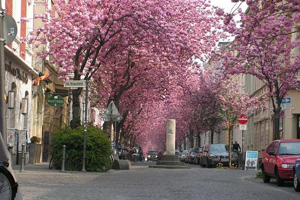TravelPass.gr - Ο δρόμος με τις ανθισμένες κερασιές