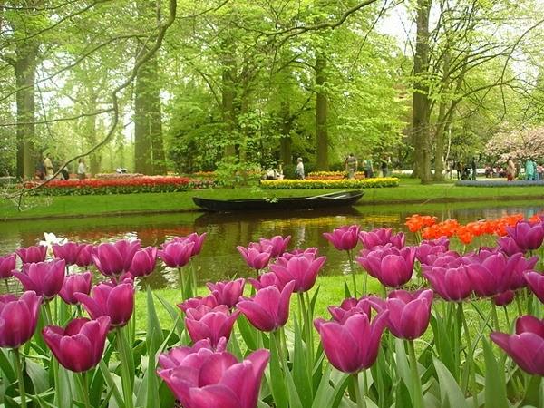 Keukenhof: Ο μεγαλύτερος κήπος λουλουδιών στον κόσμο!