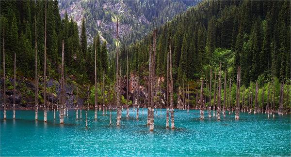 TravelPass.gr - Η λίμνη με τα βυθισμένα έλατα