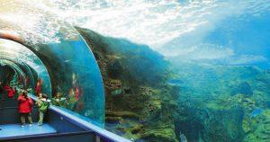 Θαλασσόκοσμος: Το μεγαλύτερο θαλάσσιο πάρκο της Ελλάδας